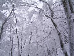 20060205-04
