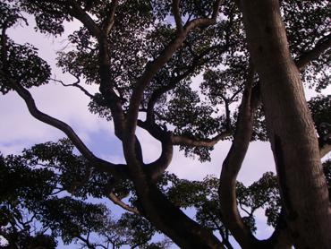 ホテル「白い灯台」の駐車場の木
