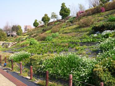 寝屋川公園中央広場花壇